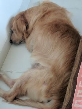 Cornered to sleep