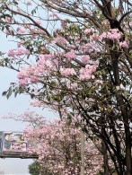 Pale pink 1