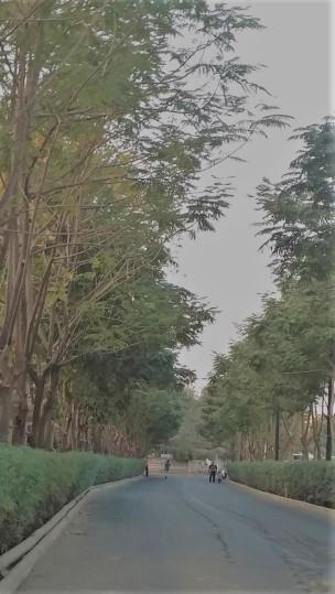 A road with a twist 2.jpg